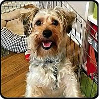 Adopt A Pet :: GIZ MO - ADOPTION PENDING - Seymour, MO