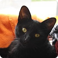 Adopt A Pet :: Eugene - Indianapolis, IN
