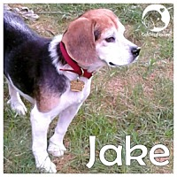 Adopt A Pet :: Jake - Chicago, IL