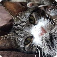 Adopt A Pet :: Milhouse - Bensalem, PA
