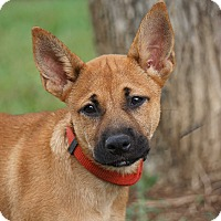 Adopt A Pet :: *Rylee - PENDING - Westport, CT