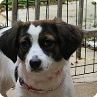 Adopt A Pet :: Maya - San Antonio, TX