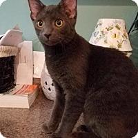 Adopt A Pet :: Mollie - Millersville, MD