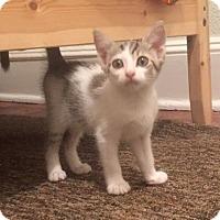 Adopt A Pet :: Uma - Philadelphia, PA