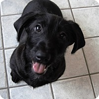 Adopt A Pet :: Geronimo - Seattle, WA