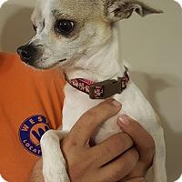 Adopt A Pet :: Emma - Summerville, SC