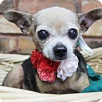 Adopt A Pet :: Bell - Benbrook, TX