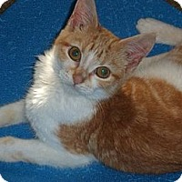Adopt A Pet :: Olivia - Norwich, NY