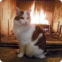 Adopt A Pet :: Mona - Richland, MI