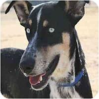 Adopt A Pet :: Anakin - Phoenix, AZ