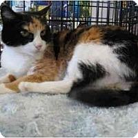 Adopt A Pet :: Callie - Easley, SC