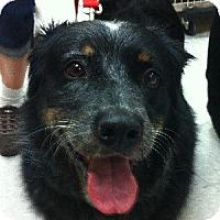 Adopt A Pet :: Spot - Gilbert, AZ