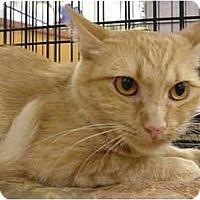 Adopt A Pet :: Babette - The Colony, TX