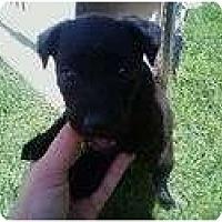 Adopt A Pet :: BROGAN - La Mesa, CA