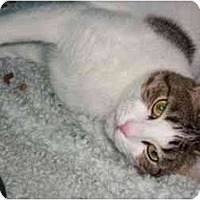 Adopt A Pet :: Mommy Cat - Secaucus, NJ
