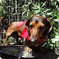 Adopt A Pet :: FRITZ-Z - Portland, OR