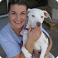 Adopt A Pet :: Abby - Scottsdale, AZ