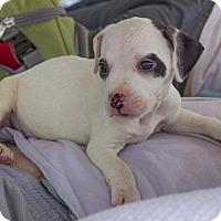 Adopt A Pet :: Tara - New Orleans, LA