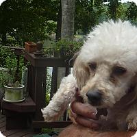 Adopt A Pet :: CASSIE - Raleigh, NC