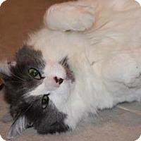 Adopt A Pet :: Gimlet - Merrifield, VA