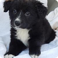 Adopt A Pet :: Bluma (6 lb) - SUSSEX, NJ