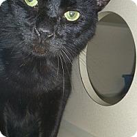 Adopt A Pet :: Luciano - Hamburg, NY