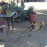 Adopt A Pet :: Sassy - La Mesa, CA