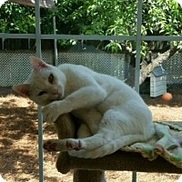 Adopt A Pet :: Blanco - Columbia, SC