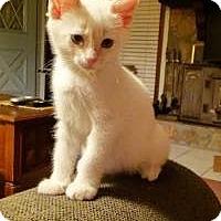 Adopt A Pet :: Kent - Duluth, GA