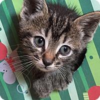 Adopt A Pet :: Raquel - Duluth, GA