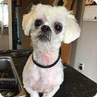 Adopt A Pet :: Lacy - Mooresville, NC