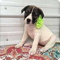 Adopt A Pet :: Marla - Russellville, KY