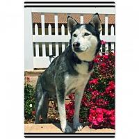 Adopt A Pet :: Neela - Anaheim, CA