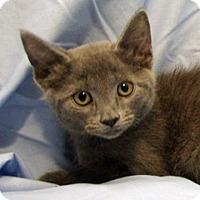 Adopt A Pet :: 16-c07-004 Portia - Fayetteville, TN