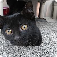Adopt A Pet :: Clark 2 - Elyria, OH