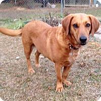Adopt A Pet :: Summer - Sagaponack, NY