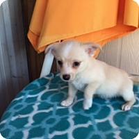 Adopt A Pet :: ROLFE - Elk Grove, CA