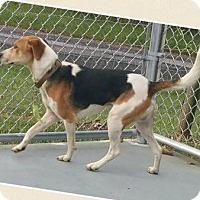 Adopt A Pet :: Cooper - Lexington, MA