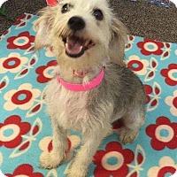 Adopt A Pet :: BonBon - Elgin, IL