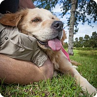 Adopt A Pet :: Layla 717 - Naples, FL