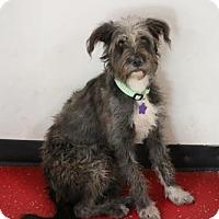 Adopt A Pet :: Bridget - Phoenix, AZ