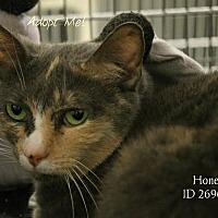 Adopt A Pet :: Honey - Camden, DE