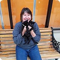 Adopt A Pet :: Tony & Minnie - Elyria, OH