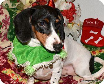 Dachshund Dog for adoption in Spokane, Washington - Picasso, pending home