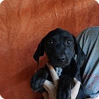 Adopt A Pet :: Delta - Oviedo, FL