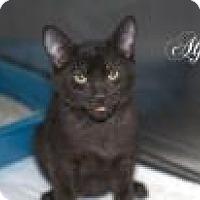 Adopt A Pet :: Alfie - Middleburg, FL
