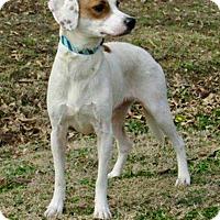 Adopt A Pet :: Val - New Kensington, PA