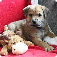 Adopt A Pet :: NEPTUNE - Loxahatchee, FL