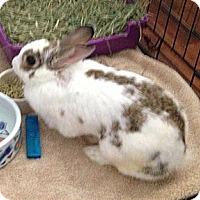 Adopt A Pet :: Annabel - Corona, CA