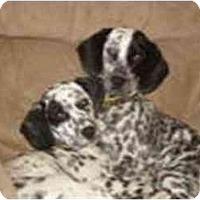 Adopt A Pet :: Mitzi - Milwaukee, WI